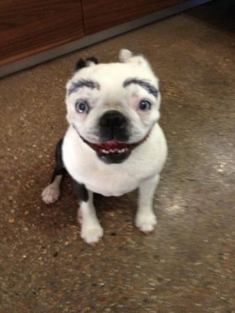 Dogs with eyebrows.  Weird.