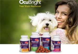 FREE OcuBright Tear Stain Remover Sample for Dogs on http://www.icravefreebies.com/
