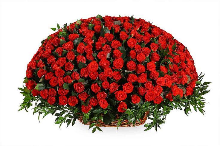 удивительный Букет 501 роза в корзине  #Букеты #Хитыпродаж,Букет501розавкорзине