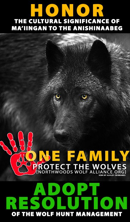 birkenstock outlet orlando Northwoods Wolf Alliance   Proposed Resolution on MN Wolf hunt Resolution  Calling for a Return to the August 28  1998 Minnesota Wolf Management Roundtable Recommendations for a Wolf Management Plan