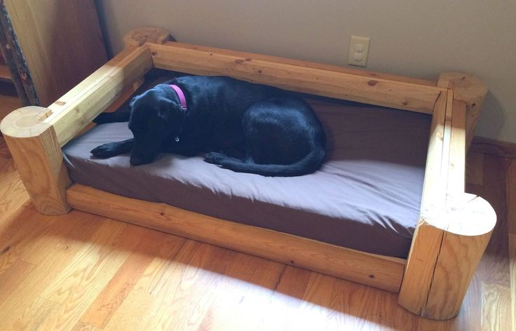 29 Best Dog Pool Images On Pinterest Dog Cat Dog Hotel