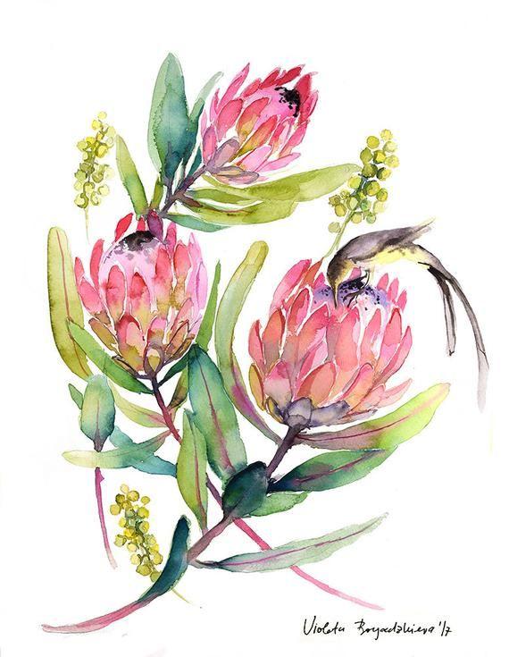 Protea Watercolor Print Watercolor Protea Painting Home Decor Etsy Protea Art Watercolor Illustration Watercolor Artwork