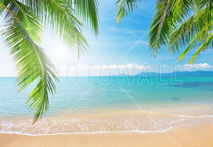 Tropical View from under a Palm Tree - Fototapeter & Tapeter - Photowall