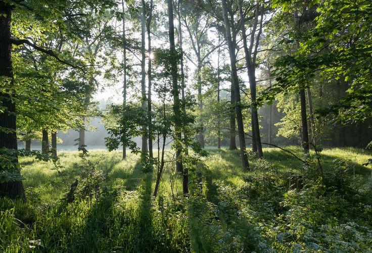 Dülmen,_Naturschutzgebiet_-Am_Enteborn-_--_2014_--_0202.jpg 4,000×2,726 pixels