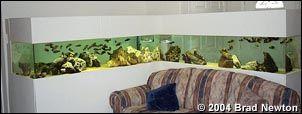 Building an Acrylic Aquarium