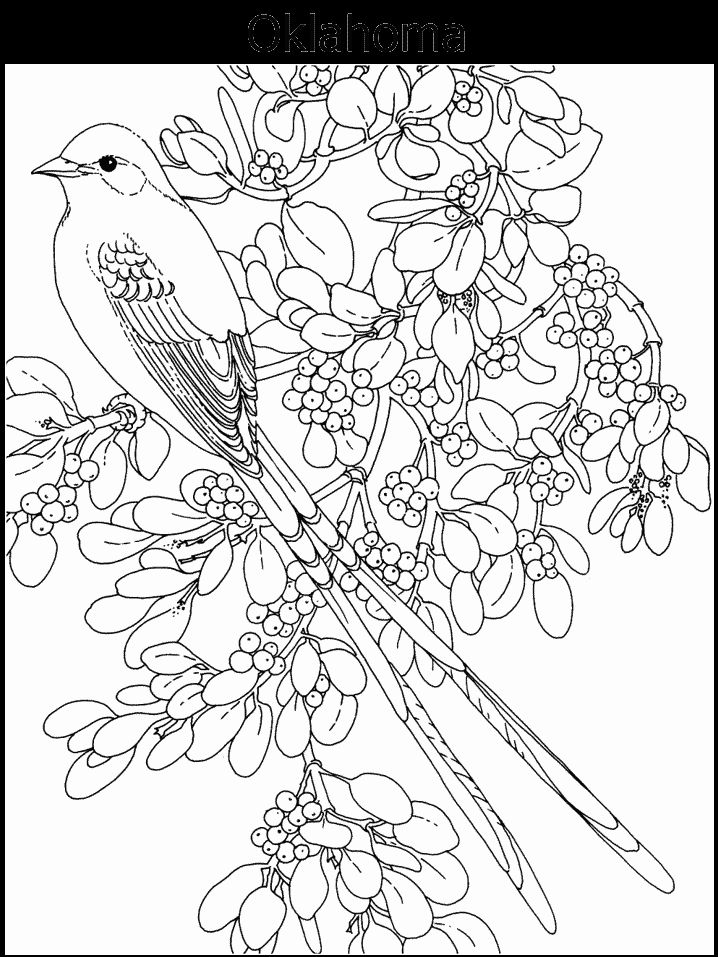 2965 best images about Coloring - flowers on Pinterest ...