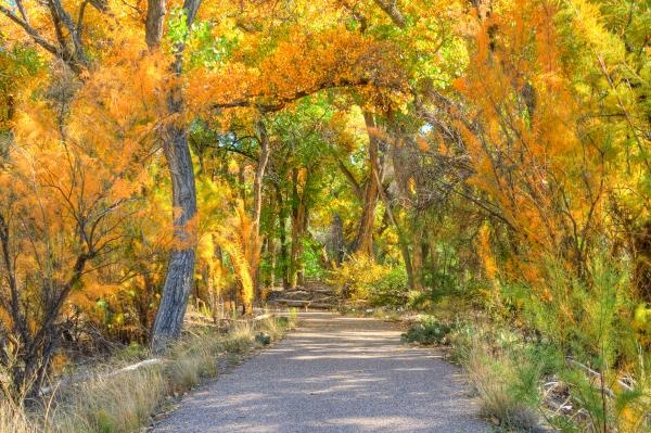 Google Image Result for http://images.fineartamerica.com/images-medium/rio-grande-bosque-1-eric-rowe.jpg: Google Image, Favorite Places, Image Results