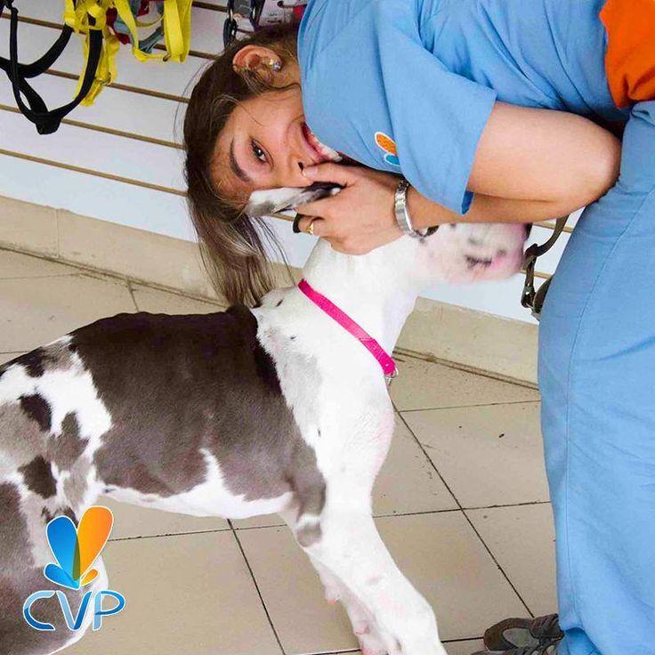 Más que profesionales, somos amantes a los #Animales, hacemos nuestro trabajo con #Amor y buscando siempre lo mejor para ellos. ¡Déjalo con nosotros, está en muy buenas manos! #CVP #Veterinarios