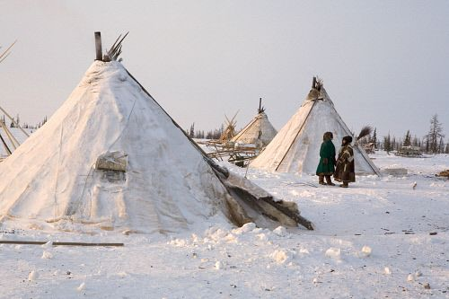 A Nenets reindeer herders' camp on the tundra near Salemal. Yamal, Northwest Siberia, Russia