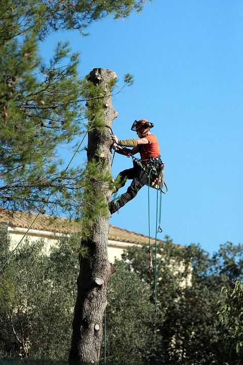 Our professional and qualified tree climbers can also access difficult-to-reach trees for all necessary trimming or tree removals. https://talltimberstreeservices.com.au/ Call +61414627627 today