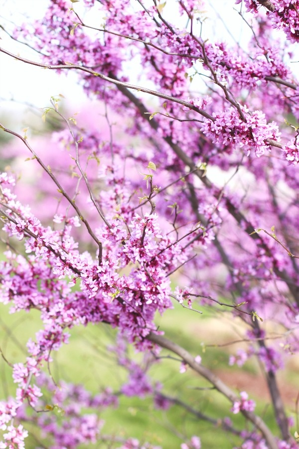 17 Best Images About Symbols Of Spring On Pinterest A