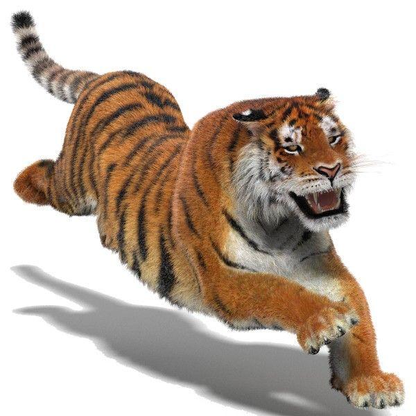 Картинки анимированные с тигром
