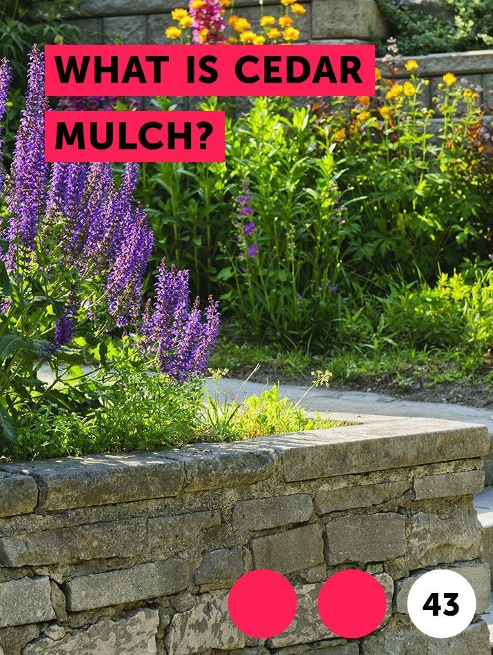 What Is Cedar Mulch Mulching Plays A Major Role In Gardening And Landscaping While Various Types Of Mulches Help Hold In Soil Moi What Is Cedar Mulch Plants
