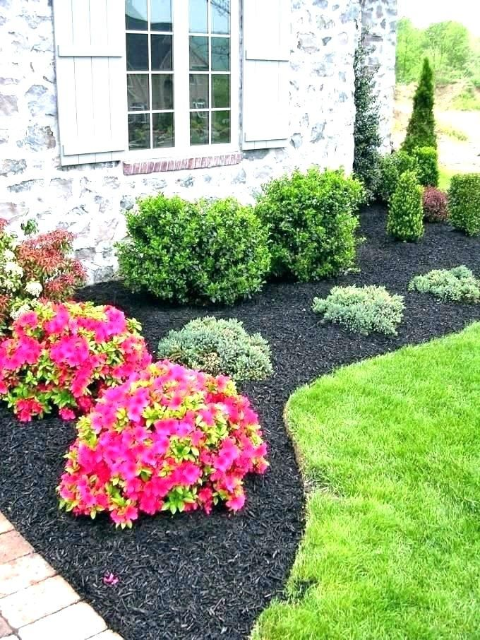 Shrubs For Front Yard Landscaping Bushes Of House Best Evergreen