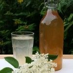 ELDERFLOWER CORDIAL - Sophie Uliano