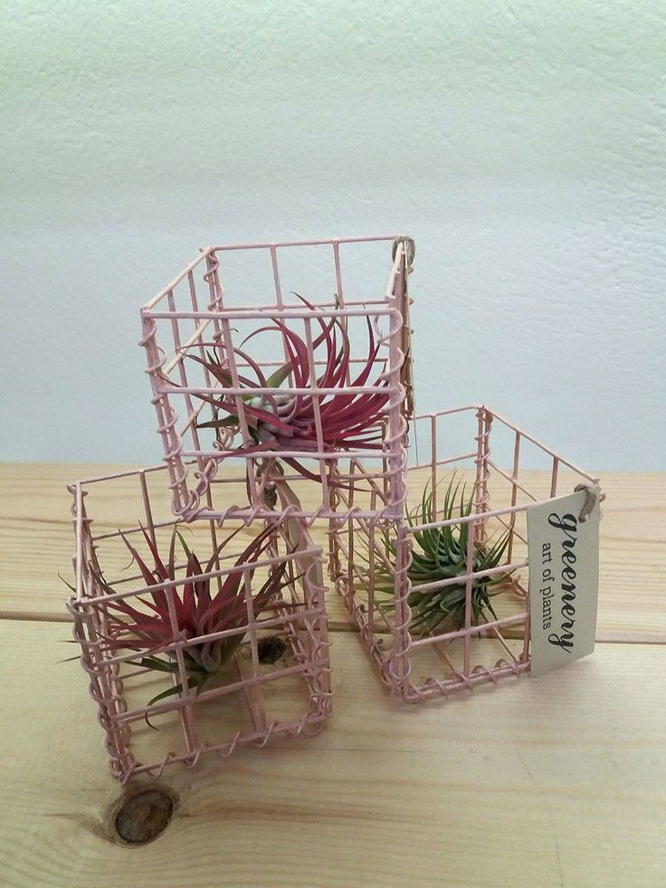 Pink gabion cage with air plant – Gabion creations by greenery #gabion #gabioncreations #pots #greenery #airplants #succulents #cactus #plants #chania #greece