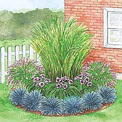 Zebra Grass provides the central focus, supported by Fountain Grass on either side. Daylilies and blue-tinged Festuca Grass introduce colorful highlights that complete this low maintenance garden.