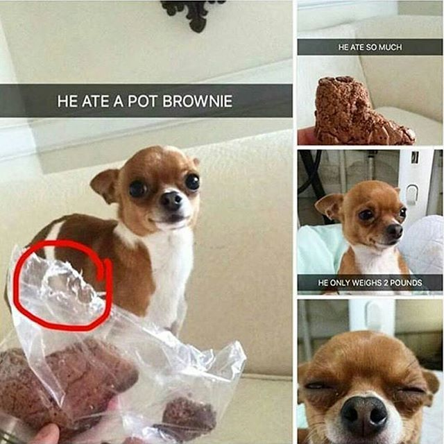 Shouldn't they be concerned that their dog ate chocolate?!??????!???