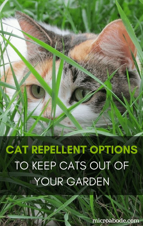 Spray To Keep Cats Out Of Gardens