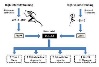 Science of Running: Crossfit endurance, Tabata sprints, and why people just don't get it