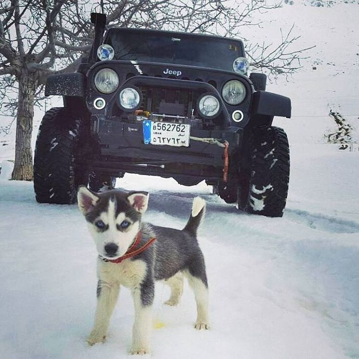 """Reposting @thejeepobsessed: ... """"Good morning #jeepnation! Here's an amazing jeep and pup @seven_slot_jeep_lebanon. Have a great day """""""