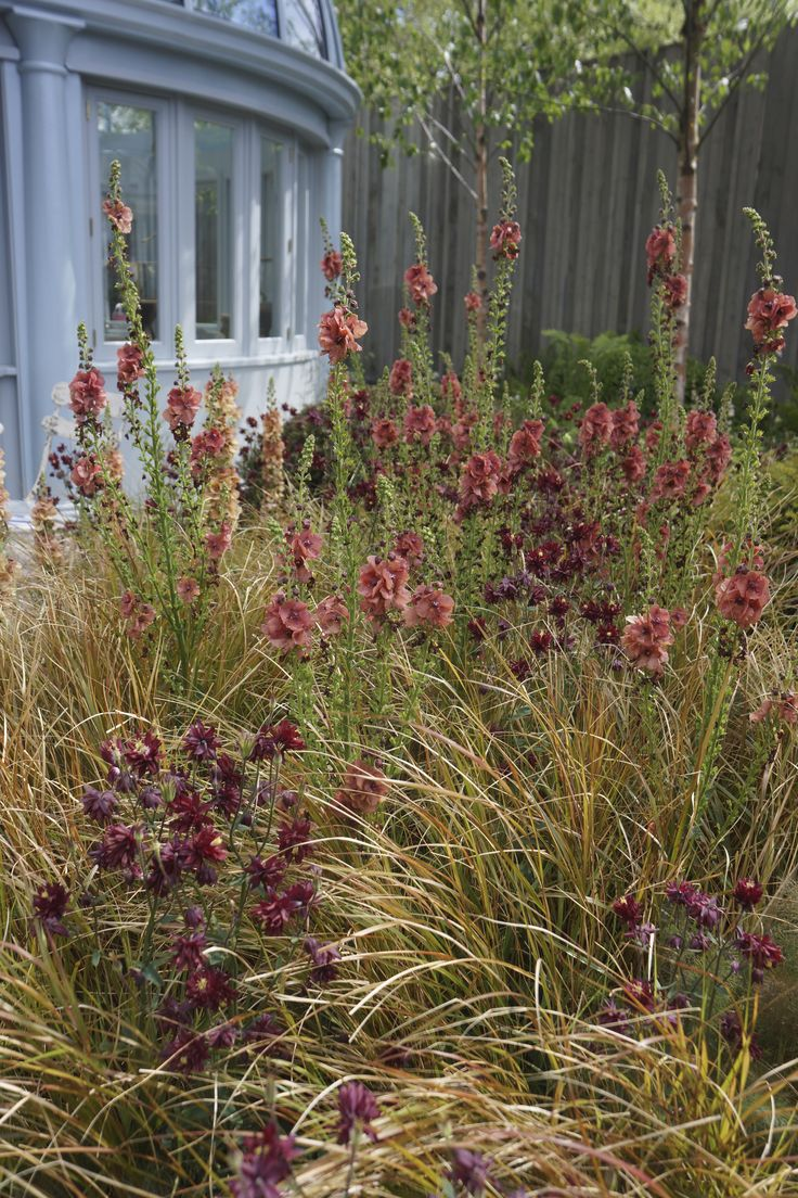 114 best images about plants combinations on pinterest for Planting schemes with grasses