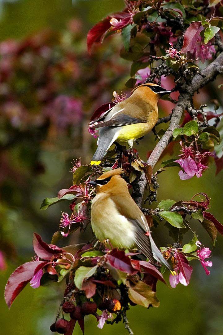 Love birds #4560