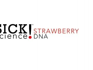 Strawberry DNA Lab      Strawberry DNA Lab Strawberry DNA LabViews: 49 | By: K | Category: Science