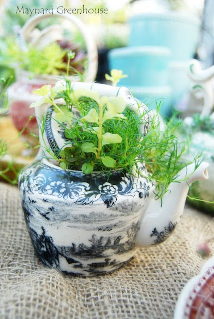 .herbs in teapots love!
