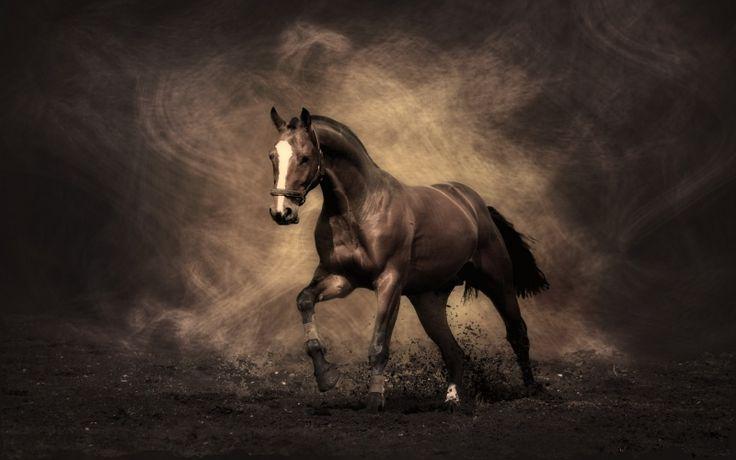 Я люблю лошадей.