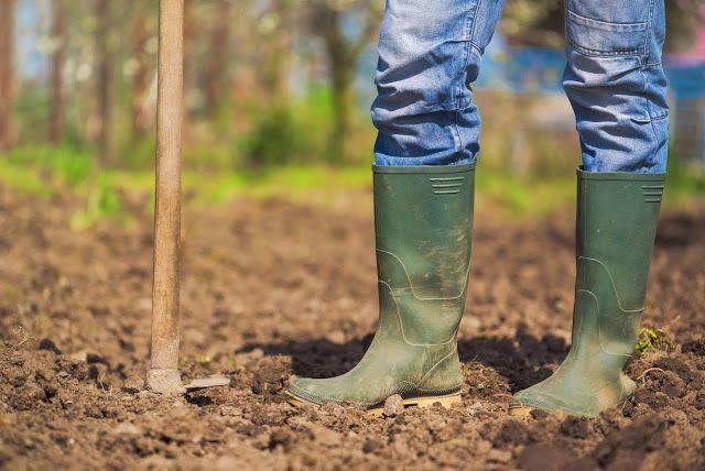 Águas de Pontal: Entenda como a permacultura colabora para um plant...