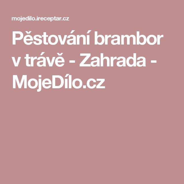Pěstování brambor v trávě - Zahrada - MojeDílo.cz