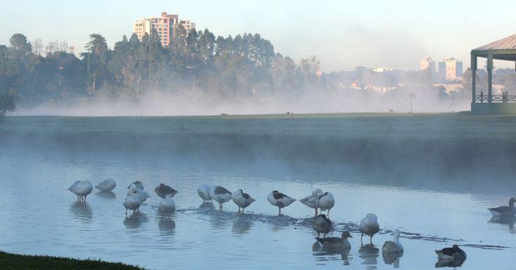 Patos se banham em lago do parque Barigui, em Curitiba (PR), que amanheceu com 1ºC. Fotografou a geada no Sul do país? Mande sua foto para o WhatsApp do UOL (11) 97500-1925