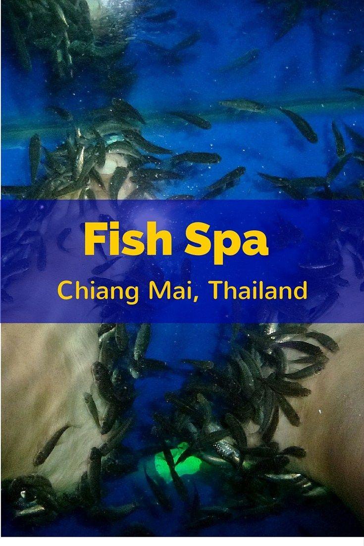 1195 best family travel images on pinterest travel for Mai mai fish