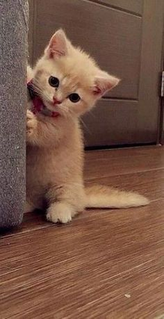 Want more cute tiny Want more cute tiny kitten pictures? Click the photo for mor…