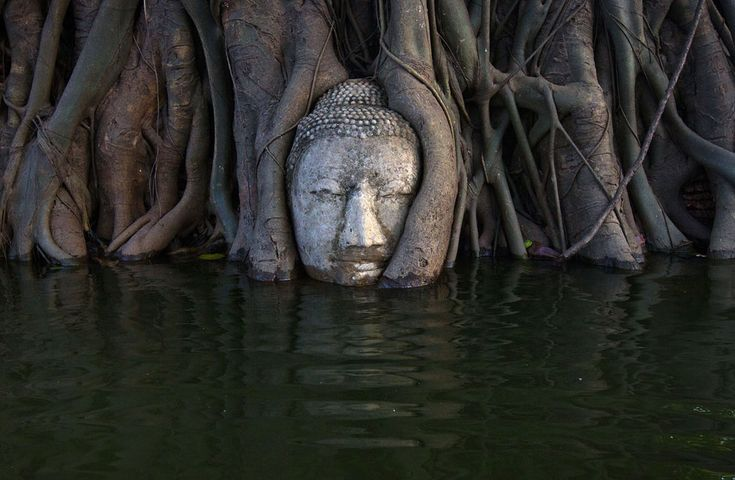 A Buddha head in the roots of a Bodhi tree is partially submerged by floodwaters in the ruins of Wat Mahathat temple in Thailand