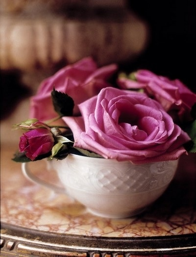 <3  Cup of roses #roses. #teacup