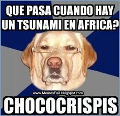 Racist Dog meme funny - http://whyareyoustupid.com/racist-dog-meme-funny/?utm_source=snapsocial