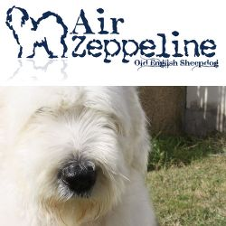 http://www.airzeppeline.it/