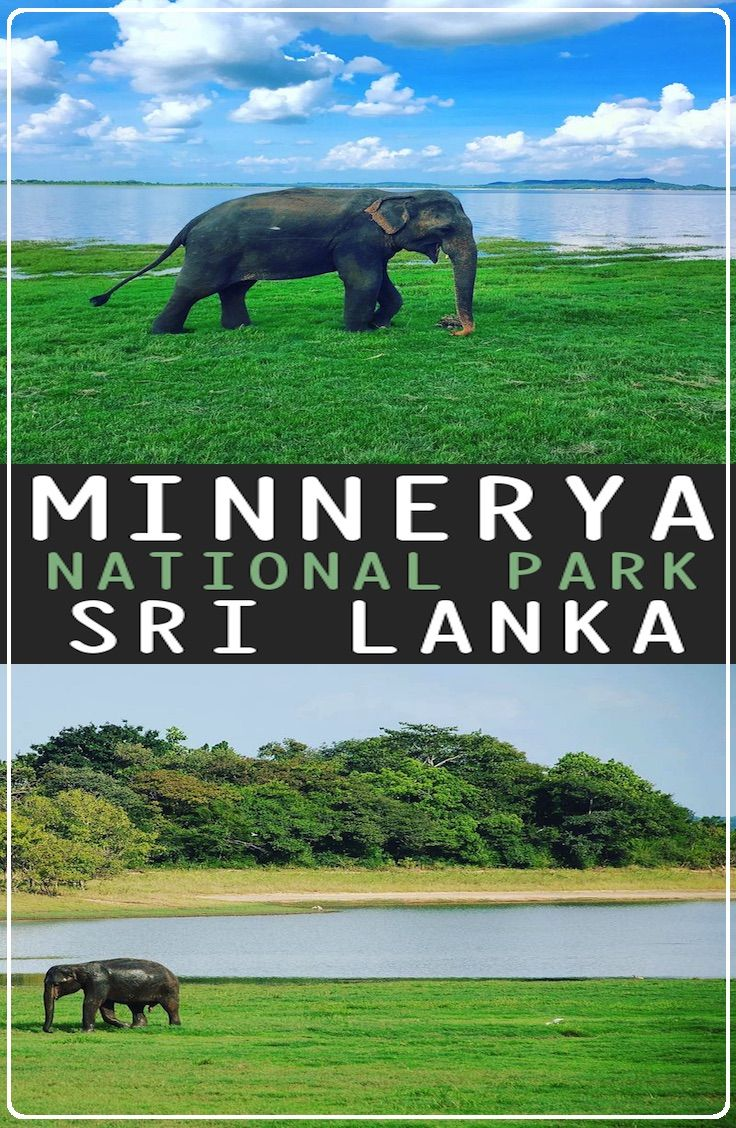 Guide: Minnerya National Park, Sri Lanka