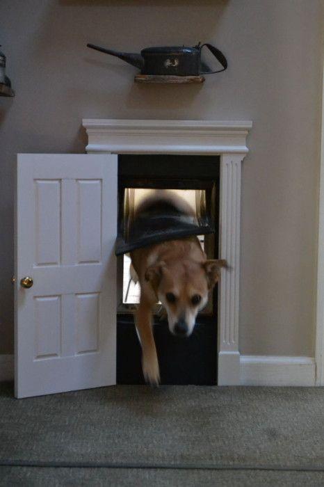 Best 25 Pet Door Ideas On Pinterest Dog Rooms Ti And