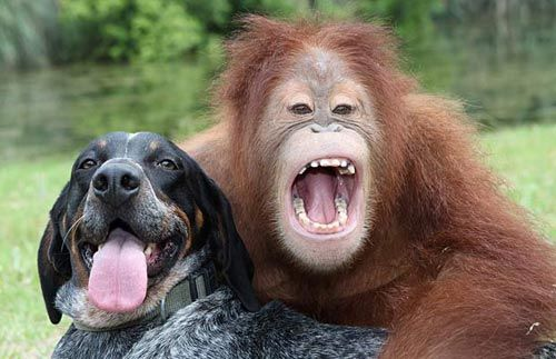 Orang and Hound, Buddies for life