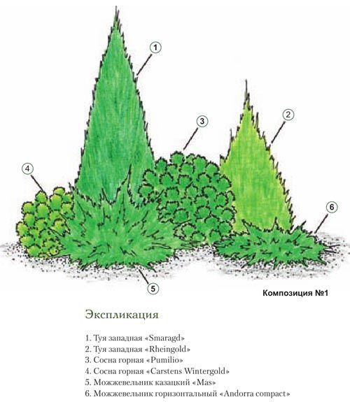 Хвойные композиции для вашего сада