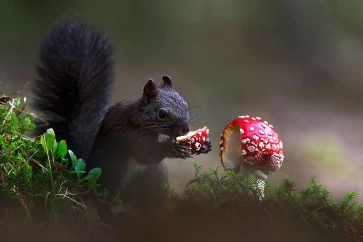 Squirrel in the forest with mushrooms  Animal photography