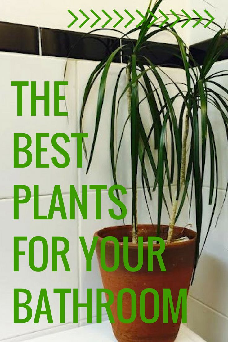 Transform your bathroom into a tropical paradise with houseplants. The high humidity in the average bathroom makes it the perfect environment for many tropical plant varieties. And houseplants are nature's air purifiers. Click through to see which of these plants you want to add into your bathroom decor.