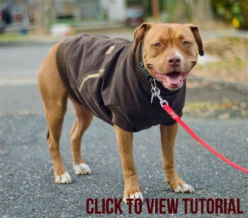 Carhartt Dog Jacket