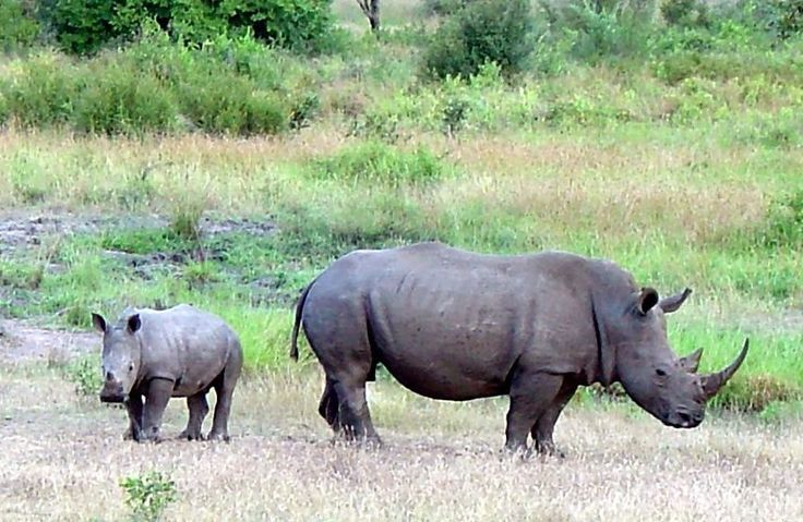 Assam makes effort to curb Rhinoceros poaching