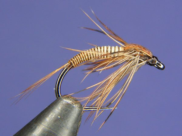 98 best western north carolina trout fishing flies images for Best trout fishing in nc