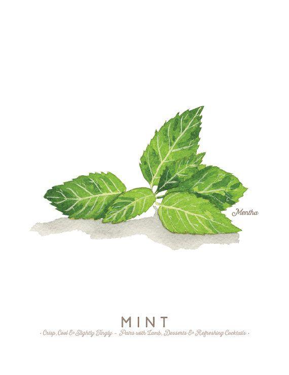 Mint Herb Watercolor Illustration Print by cheryloz on Etsy