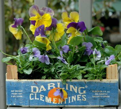 How To Make an Easy Container Garden in Clementine Box  Violas and pansies (both edible) make it so pretty!